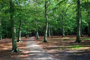 forest-475673_960_720