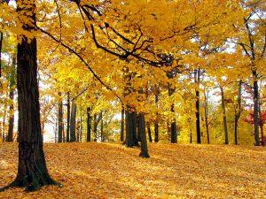 tappeto-di-foglie