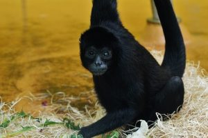monkey-1348921__340